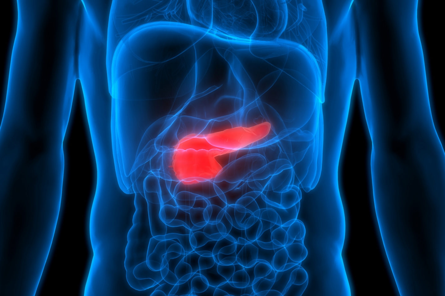 Diagram that shows where the pancreas is located in the body
