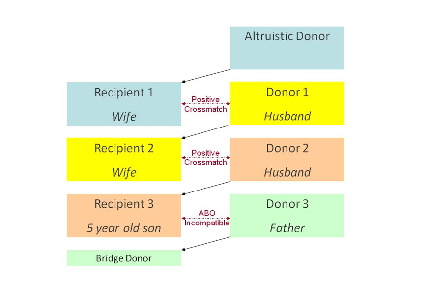 Chart that explains how altruistic donors fit into a donor chain