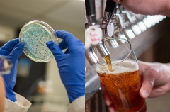 A scientist examines bacteria and a bartender pours beer.
