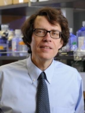 Lionel B. Ivashkiv, M.D. Profile Photo